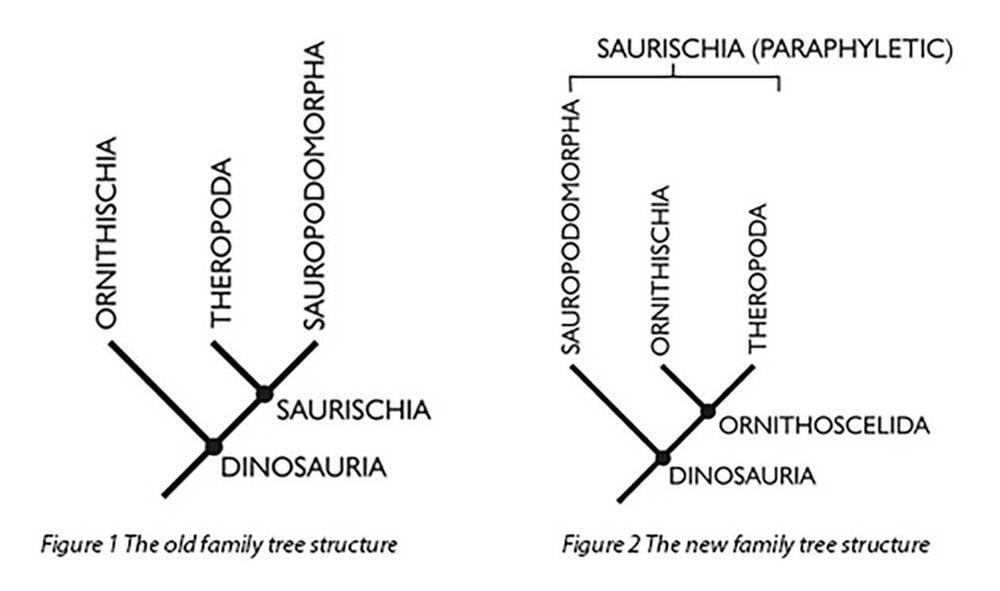 Ученые предлагают пересмотреть классификацию динозавров