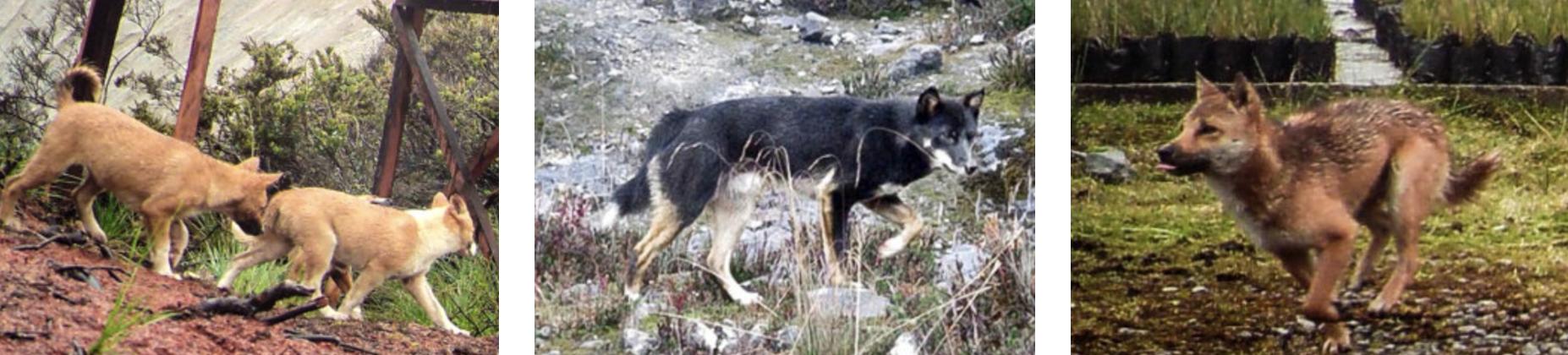 Ученым удалось получить фотографии самой древней из существующих собак