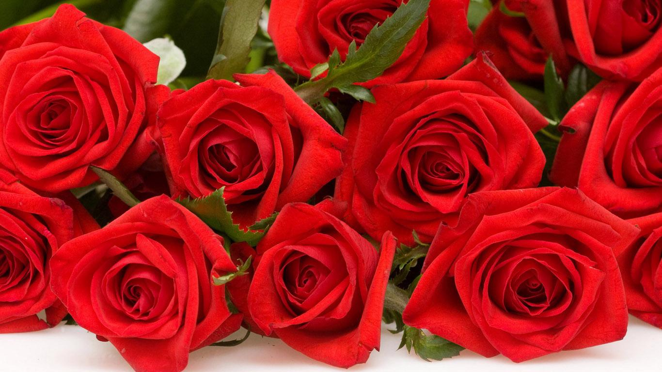 Картинки с цветами розы