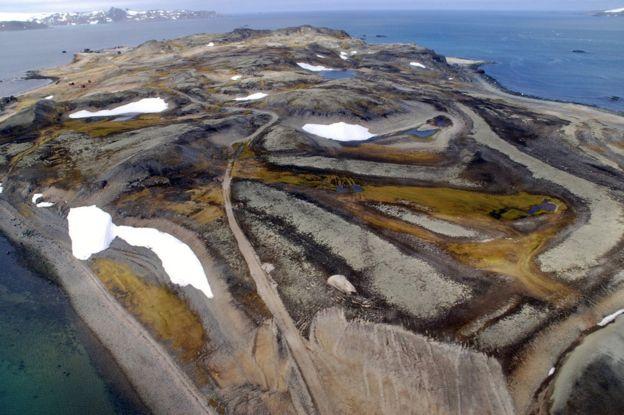 """Ученые обнаружили """"возрождающуюся из пепла"""" колонию пингвинов"""