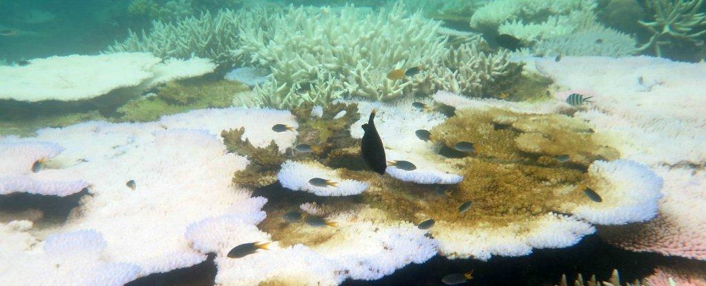 Большой Барьерный риф находится на грани исчезновения