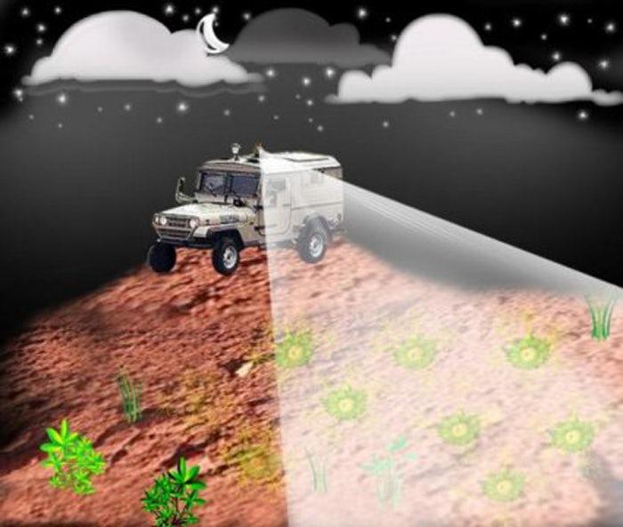 Светящиеся бактерии помогут искать мины