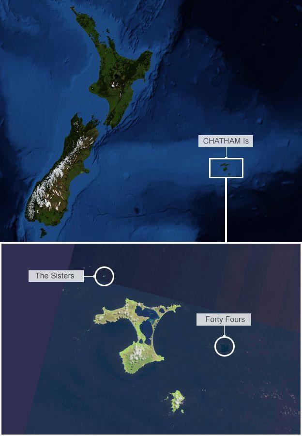 Ученые посчитали альбатросов из космоса