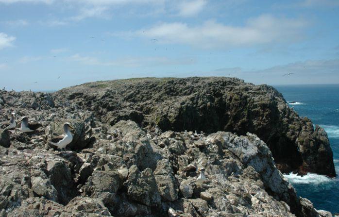 Английские ученые пересчитают Северных Королевских альбатросов спомощью снимков соспутника