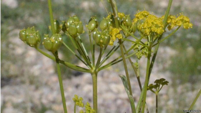 В прошлом году было обнаружено почти 2000 новых видов растений