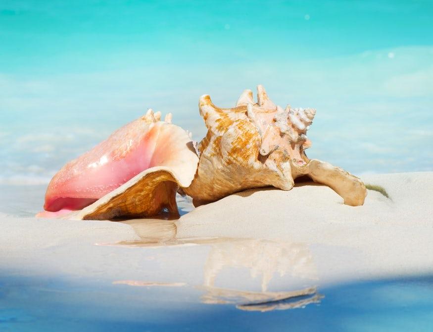 Создан особо прочный материал со структурой морской раковины