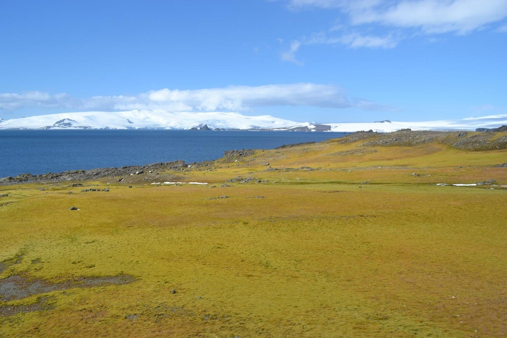 Антарктида становится все зеленее