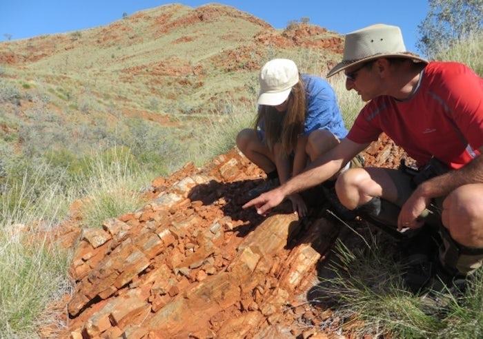 Жизнь на суше появилась на сотни миллионов лет раньше