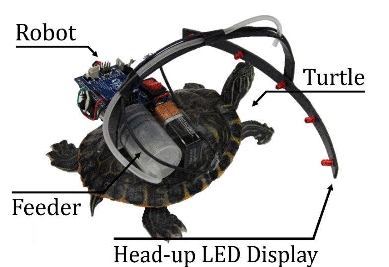 Корейские ученые создали робота для управления животными