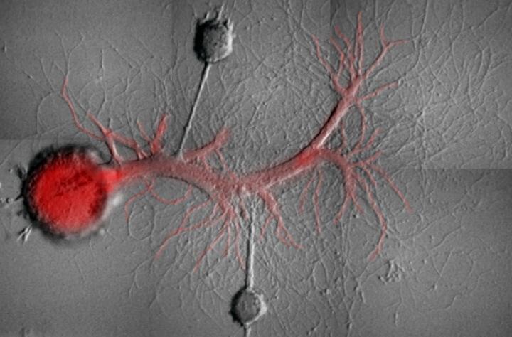 Ученые научились стирать плохие воспоминания