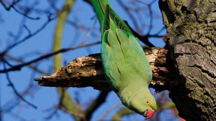 Ученые назвали самые привлекательные для миграции животных страны