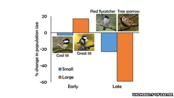 Ученые объяснили причину сокращения численности некоторых видов животных