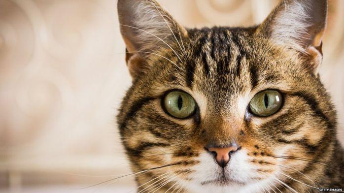 Кошки были одомашнены 9000 лет назад— Ученые