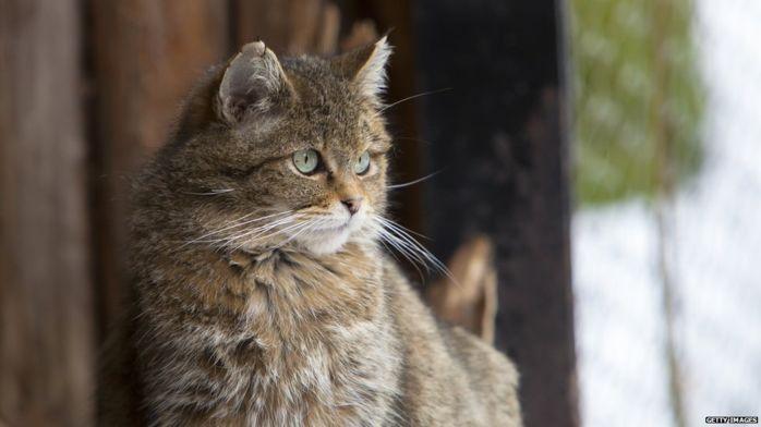 Ученые рассказали, как проходило одомашнивание кошек