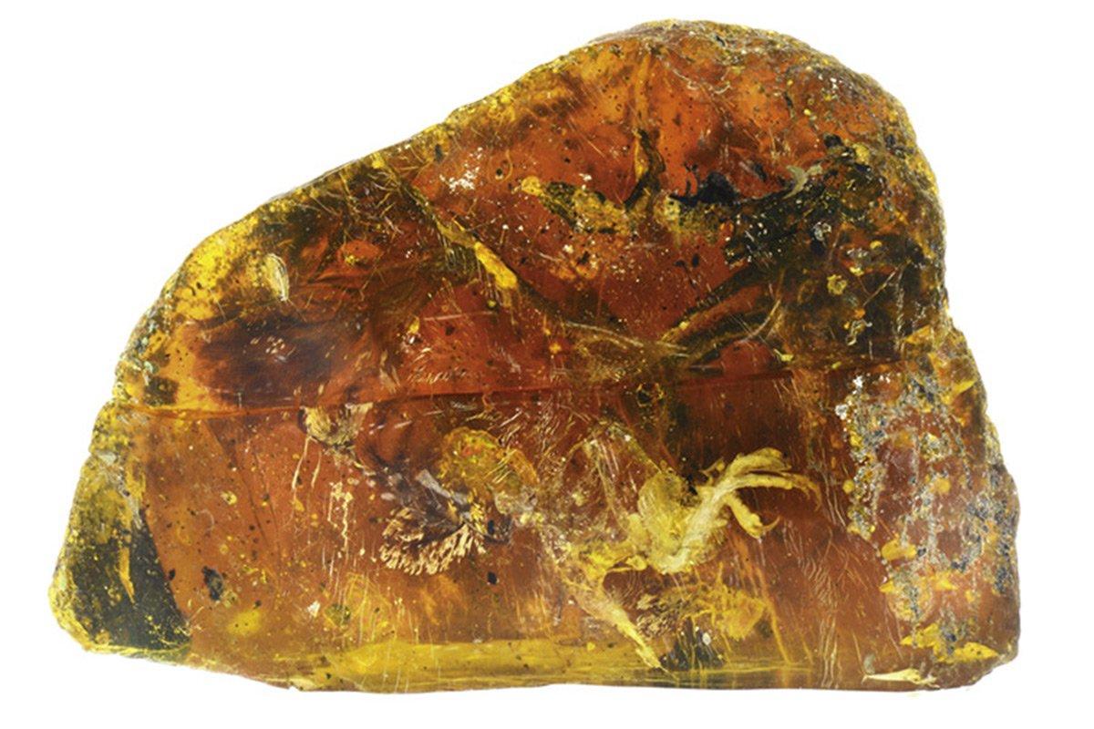Ученые нашли в янтаре птенца возрастом 100 миллионов лет
