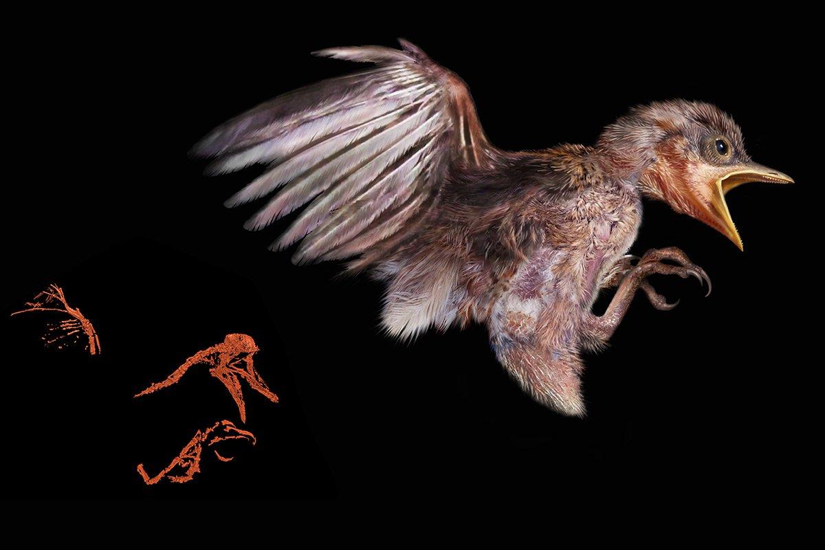 В «Поднебесной» представили птенца вянтаре возрастом 99 млн лет