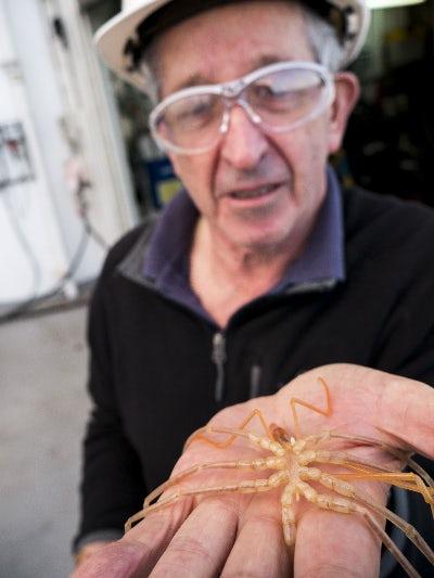 Международная команда ученых нашла безликую рыбу и старейших пауков
