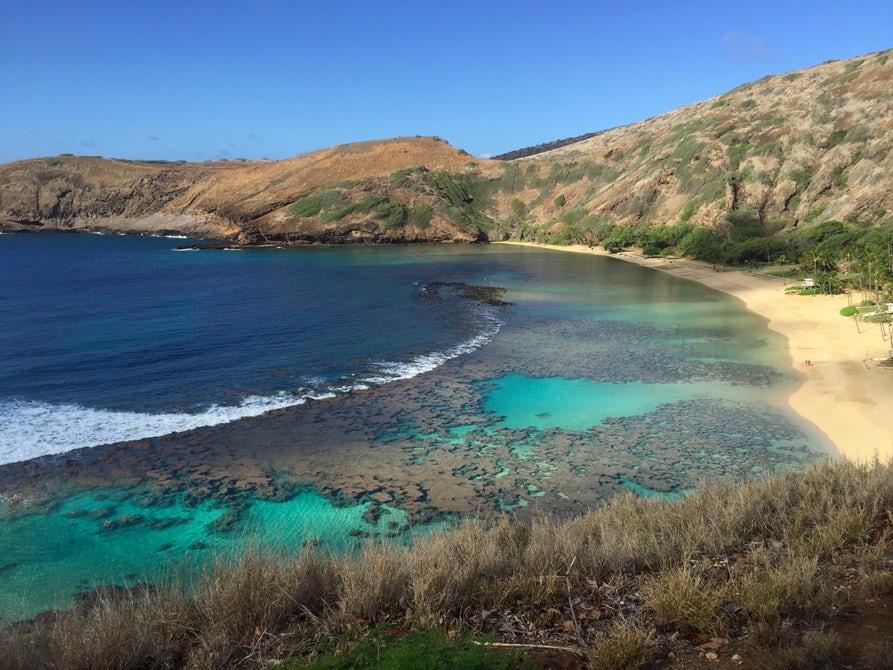 Кораллы в Северном полушарии начали терять цвет