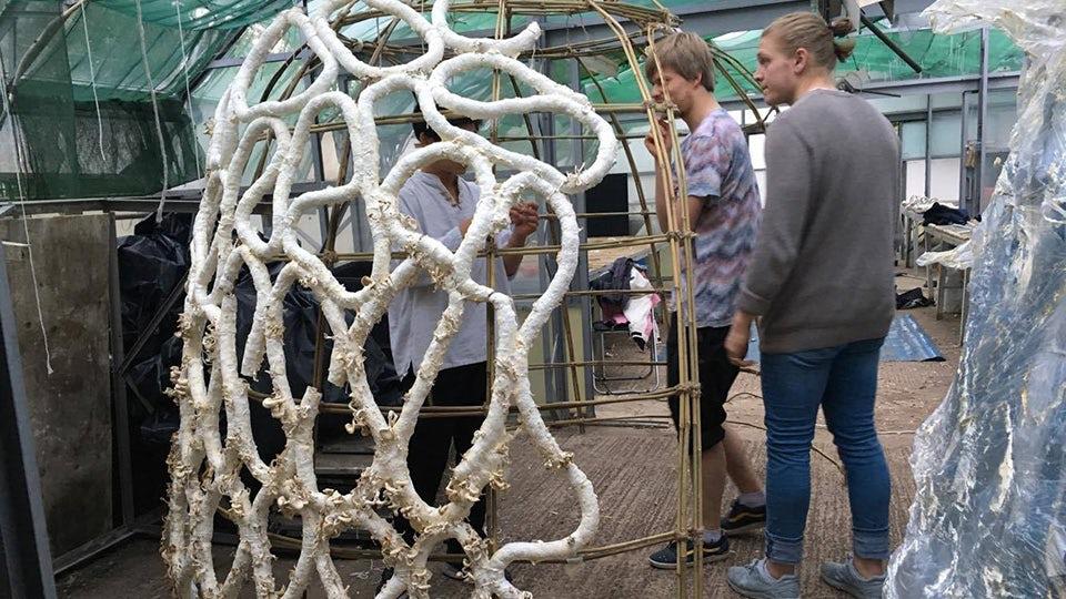 В Англии разработан строительный материал из грибов