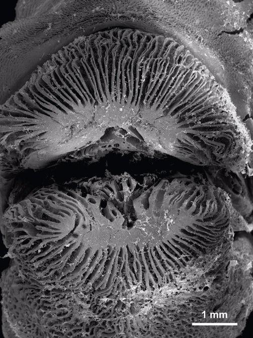 Ученые рассказали, почему губаны могут есть кораллы