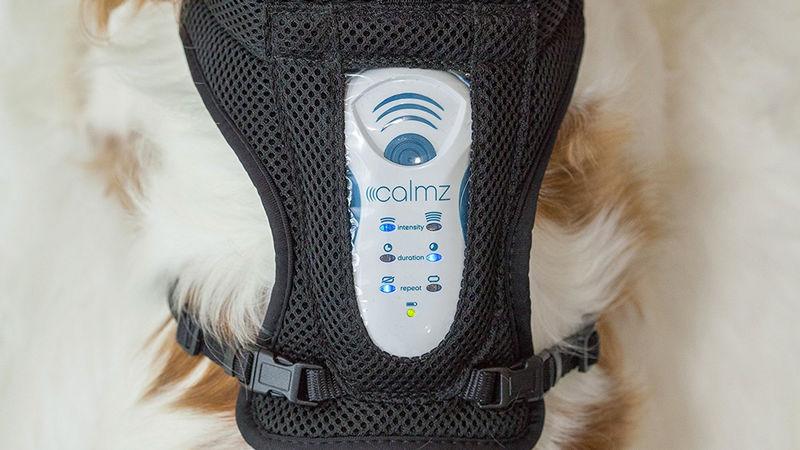 Создана система для устранения стресса у собак