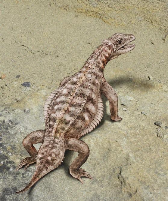 Ученые пересмотрели скелет Eusaurosphargis dalsassoi и сделали новые выводы
