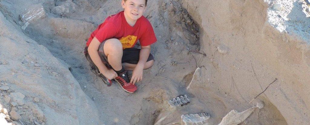 Маленький мальчик нашел череп стегомастодонта