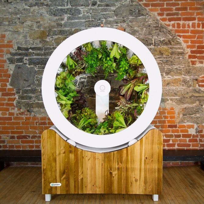 В продаже появилось колесо для выращивания домашних продуктов