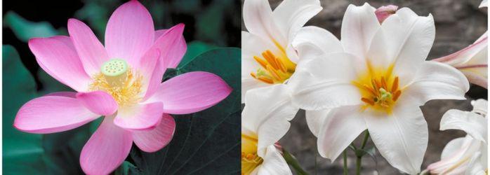 _97142663_flower_double