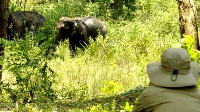 Уровень стресса у слонов можно измерить по их фекалиям