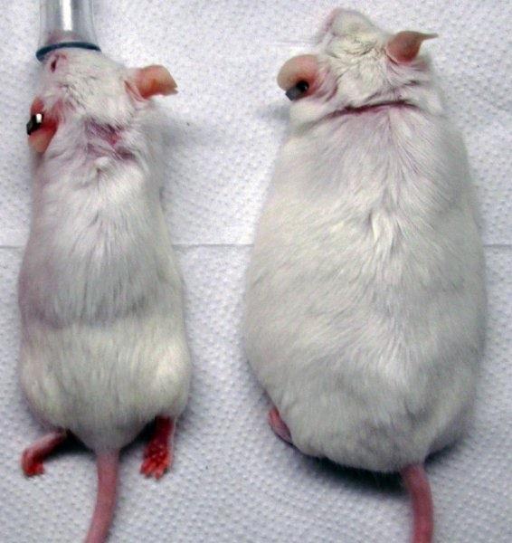 Ученые нашли способ лечения диабета при помощи пересадки кожи