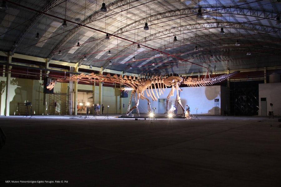 Самый большой в мире динозавр получил свое официальное название