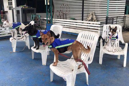 В Бангкоке появились первые смарт-собаки