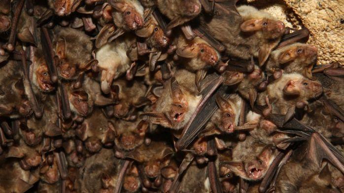Ученые объяснили, почему летучие мыши врезаются в здания