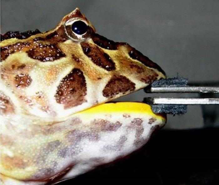 frogbite