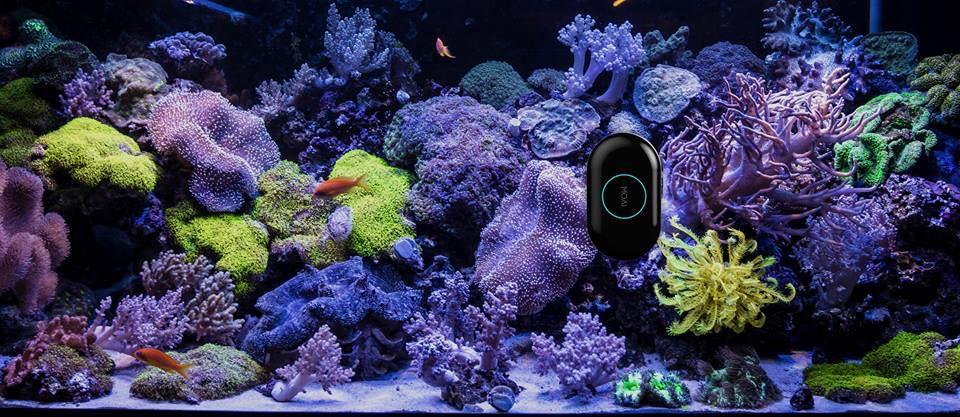 Создан автономный робот для аквариумных рыбок