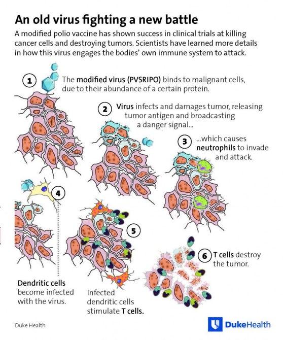 Ученые провели дополнительное исследование лечения рака полиовирусом