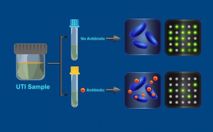 Разработке тест, быстро определяющий эффективность антибиотиков