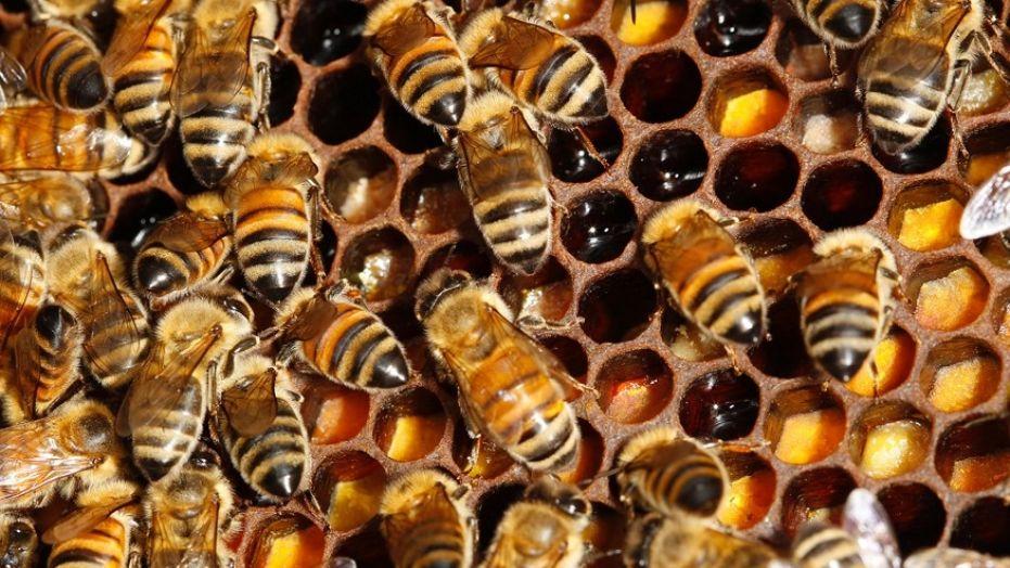 Шофёр после ДТП уничтожил пчел стоимостью неменее млн. долларов
