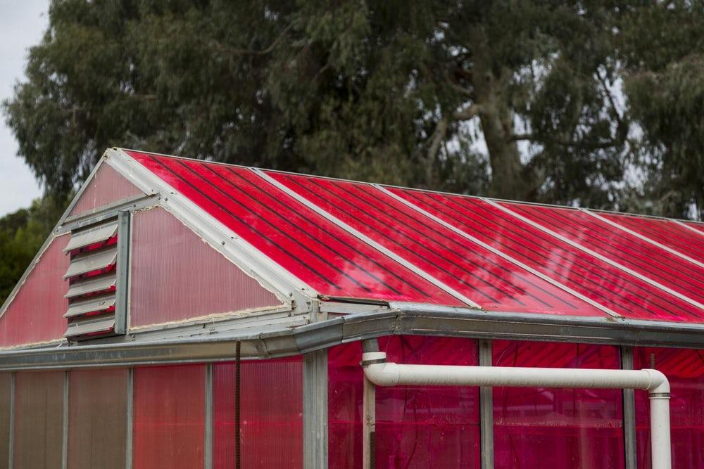 magenta-solar-greenhouses-1