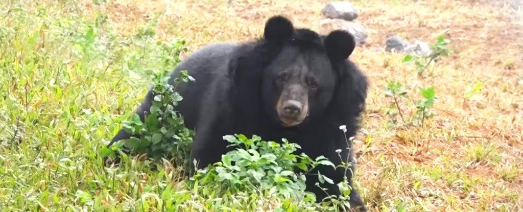 hai-chan-black-bear-sanctuary_1024