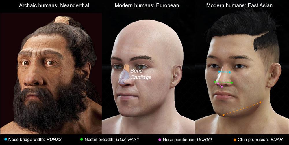 Ученые обнаружили гены внешности человека