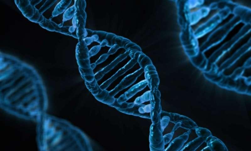 13eaaa45b343 Не секрет, что наши гены целиком и полностью определяют нас как единицу  вида – включая самые тончайшие нюансы относительно того, как мы будем  выглядеть на ...