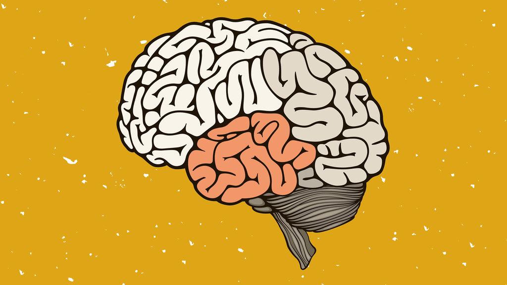 вообще картинка с мозгами и надписью мозги полу