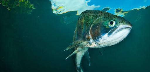 Ученые-генетики случайно создали новый рыбный гибрид