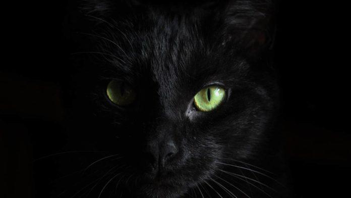 Противовирусное лекарство для кошек может помочь людям в борьбе с COVID-19