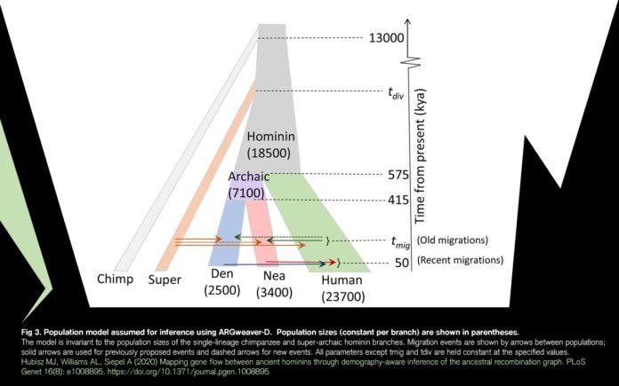 Антропологи установили существование нового вида гоминидов, повлиявших на нас