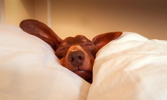 Плохой сон может быть связан с депрессией прочнее, чем ожидалось